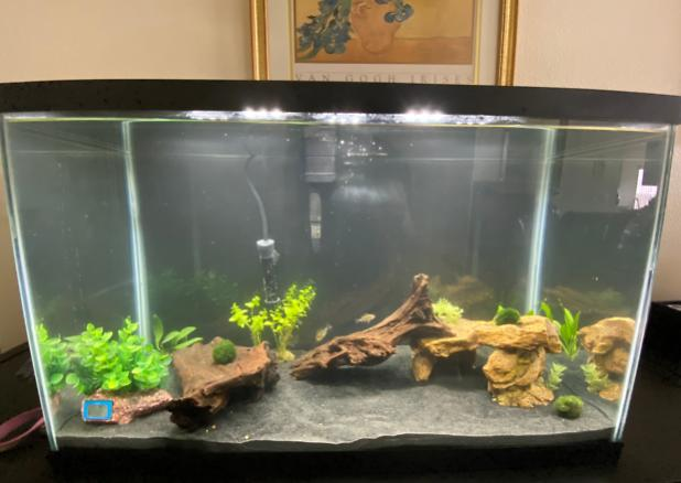 My Aquarium on Mar 23, 2020