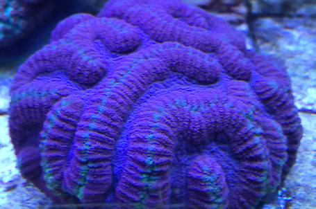 Our mixed Reef on Mar 25, 2020