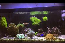 20 gallon long LPS Thumbnail