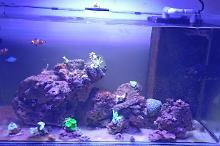 Azlan's Reef on May 12, 2020