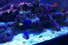 Mike's Reef Thumbnail
