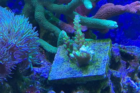 Our mixed Reef on May 18, 2020