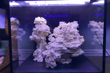 MaineREEF DT Thumbnail
