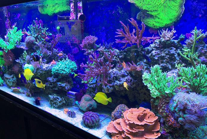 Our mixed Reef on Jun 14, 2020
