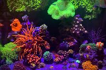 40 gallon reef Thumbnail