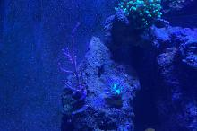 My REEF Aquarium on Jun 28, 2020