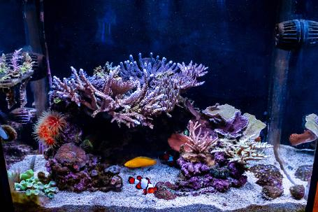 TeenyReef's IM40 Not So Teeny Tank Thumbnail