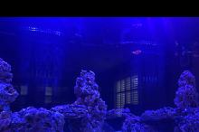 Ryan's Family Room Reef Tank Thumbnail