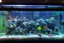 My Aquarium on Aug 27, 2020