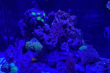 Aqua one mini reef 120  Thumbnail