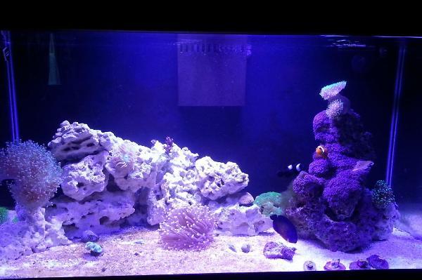 Mfield16 39 S 50g Reef
