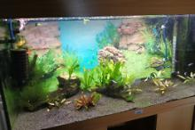 living room tank Thumbnail