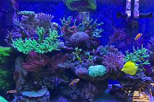Our mixed Reef on Sep 22, 2020