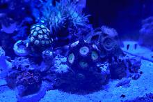 Mark's Nano Reef Thumbnail