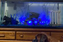 Bed Room Aquarium Thumbnail