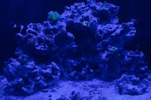 My Aquarium on Oct 31, 2020