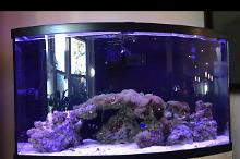 46 Gallon Bow Front Reef Thumbnail