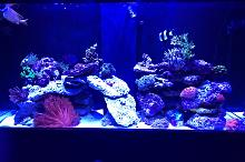 Baby Proof Reef Thumbnail