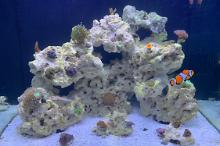 My Aquarium on Nov 15, 2020