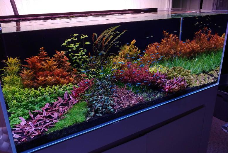 90 Gallon Custom on Nov 27, 2020