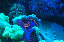 Saltwater Aquarium - Mixed Reef Tank Thumbnail