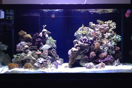 90 gallon reef Thumbnail
