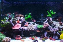 chris neills t5 lit reef Thumbnail