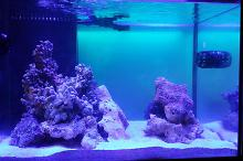 myst's 90 gallon mixed reef Thumbnail