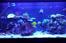 fishereef's 90 gallon mixed reef Thumbnail