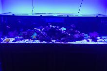 300g mixed reef Thumbnail