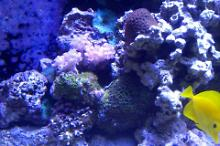 90 Gallon Mix Reef Thumbnail