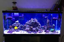 R&R 55 Gallon Reef Thumbnail