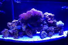 Dining Room Reef Thumbnail