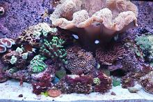 RSM 250 Mixed Reef Thumbnail
