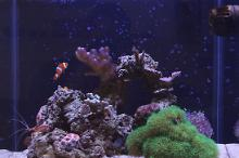 Republic of Texas Reef Thumbnail